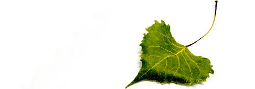 Leaf_1_1